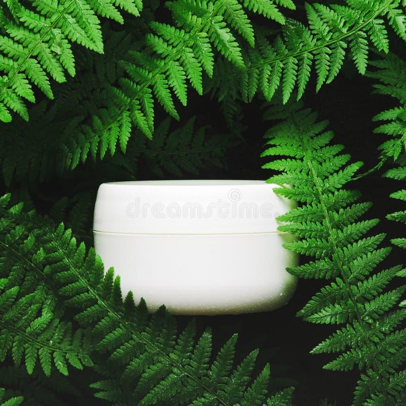 Witte kruik gezichtsroom op een achtergrond van boskruiden, varen De donkere lichte, hoogste vlakke mening, legt Concepten natuur stock afbeelding