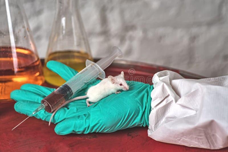 Witte laboratoriummuis in de handen van een laboratoriumtechnicus Tegen het dierlijke testen royalty-vrije stock foto's