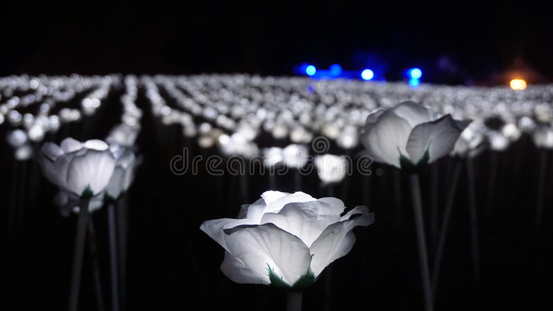 Witte LEIDENE Rozen royalty-vrije stock foto