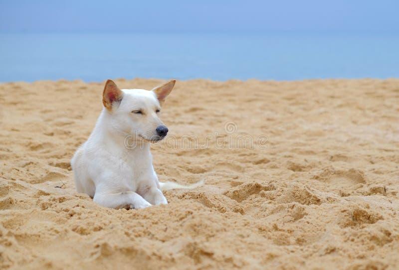 Witte leuke ontspannen hond die op het strand en het glimlachen liggen stock afbeelding