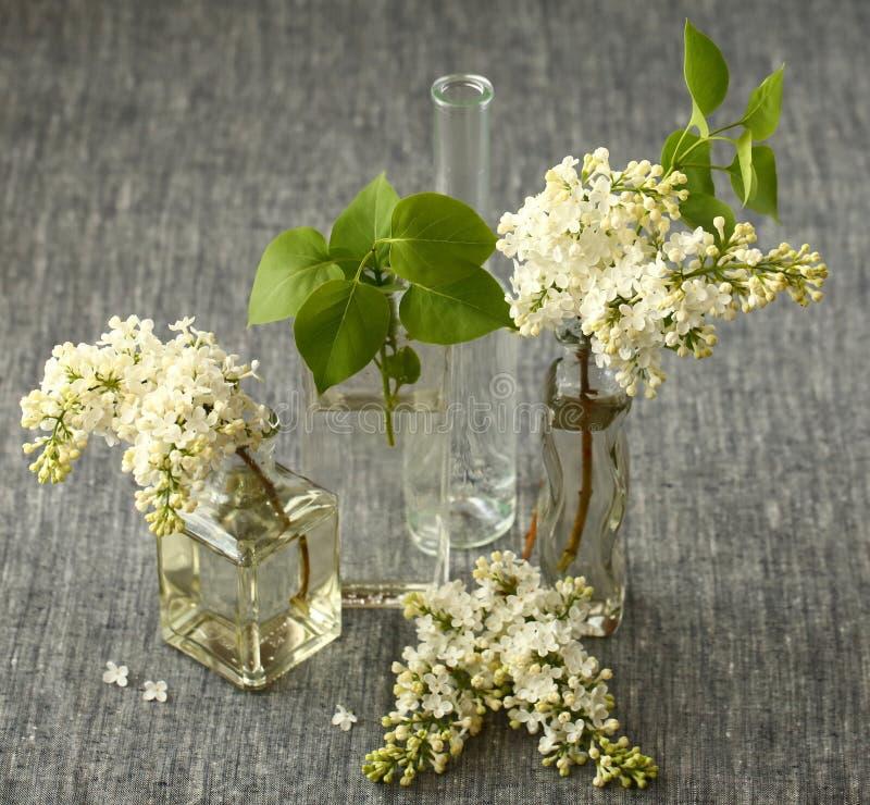 Witte Lilac Bloemen stock foto