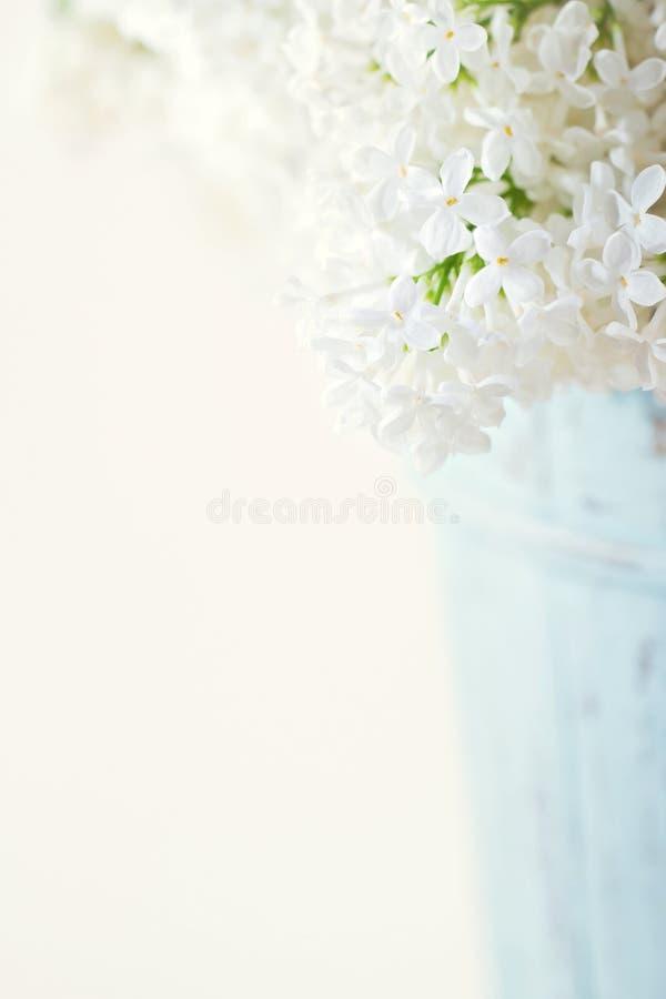 Witte lilac de lentebloemen stock afbeeldingen