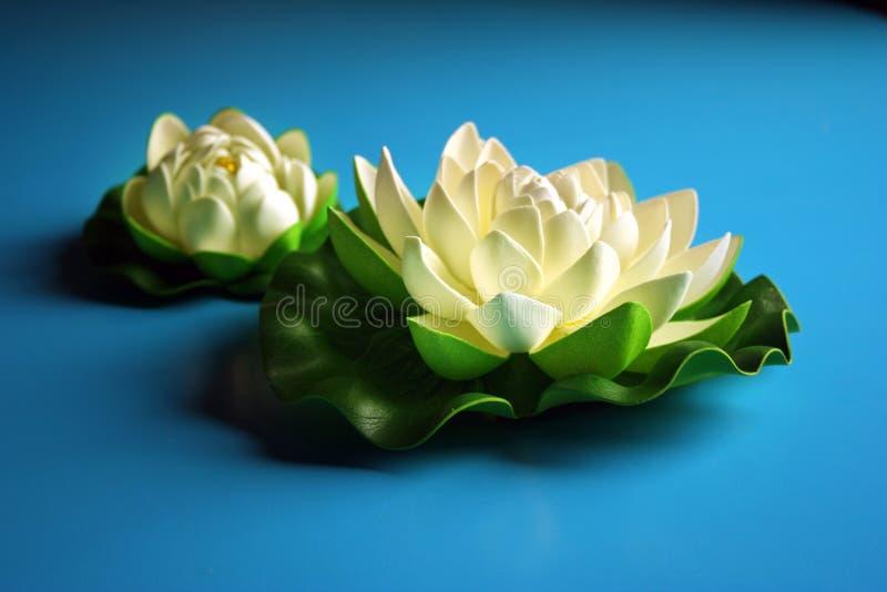 Witte lotusbloem royalty-vrije stock fotografie