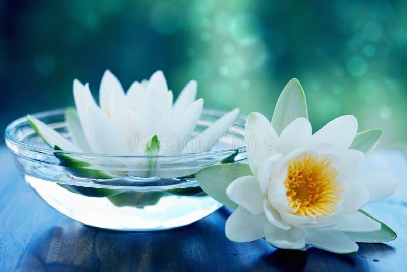 Witte lotusbloembloem stock foto