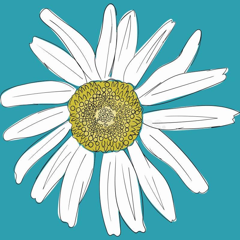 Witte madeliefje op een blauwe achtergrond Ophaling van katoenplanten Liefde-kaart Chamomile icon Groeiend concept Forfaitair ont vector illustratie