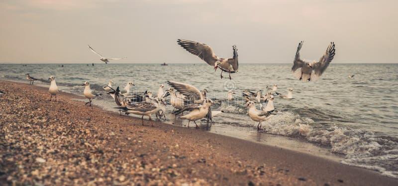 Witte meeuwen op een verlaten gelijk makend zandig strand in Los Angeles stock fotografie