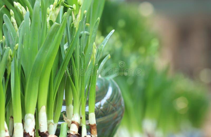 Download Witte Mooie Narcissenbloemen Stock Afbeelding - Afbeelding bestaande uit bloemen, vers: 54081173