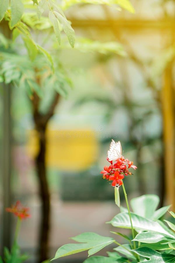 Witte mooie vlinder royalty-vrije stock afbeeldingen