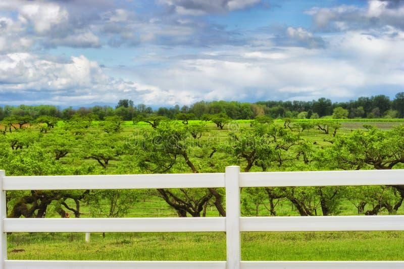 Witte Omheiningsgrenzen een boomgaard onder bewolkte hemel stock afbeeldingen