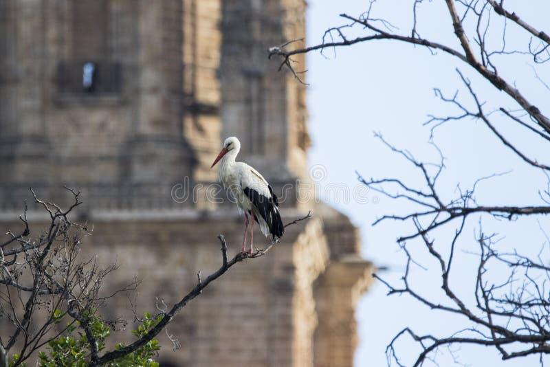 Witte ooievaar voor kathedraal royalty-vrije stock afbeelding