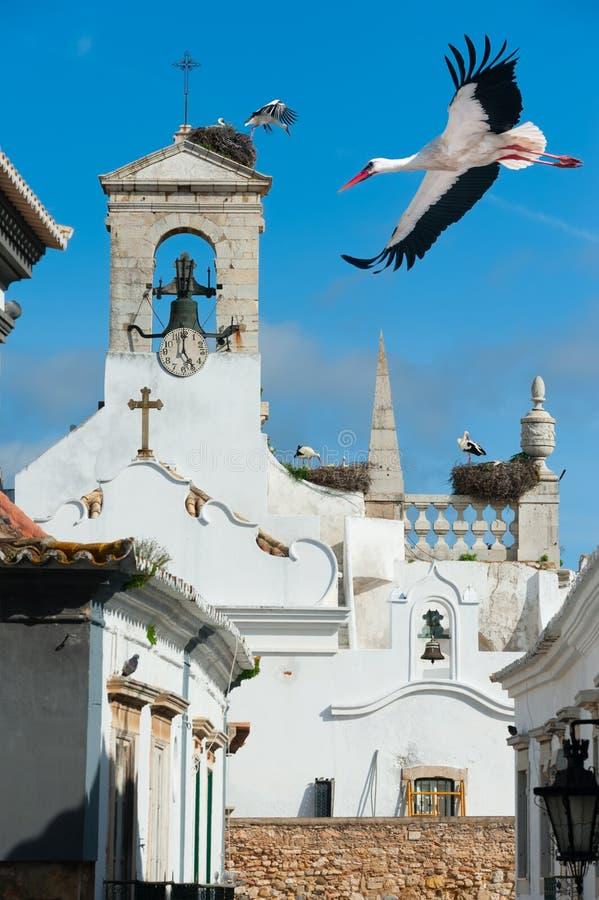 Witte ooievaars in Faro, Portugal royalty-vrije stock afbeeldingen