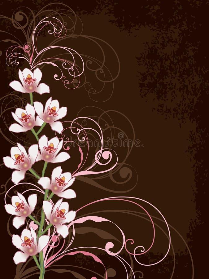 Witte orchideeën met roze wervelingen royalty-vrije illustratie