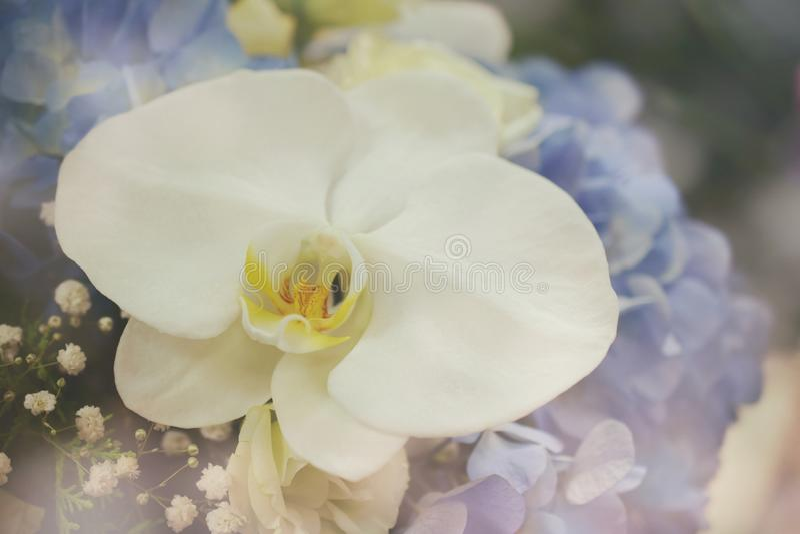 Witte Orchidee en Blauwe het Boeket Dichte omhooggaand van de Hydrangea hortensiabloem royalty-vrije stock foto's