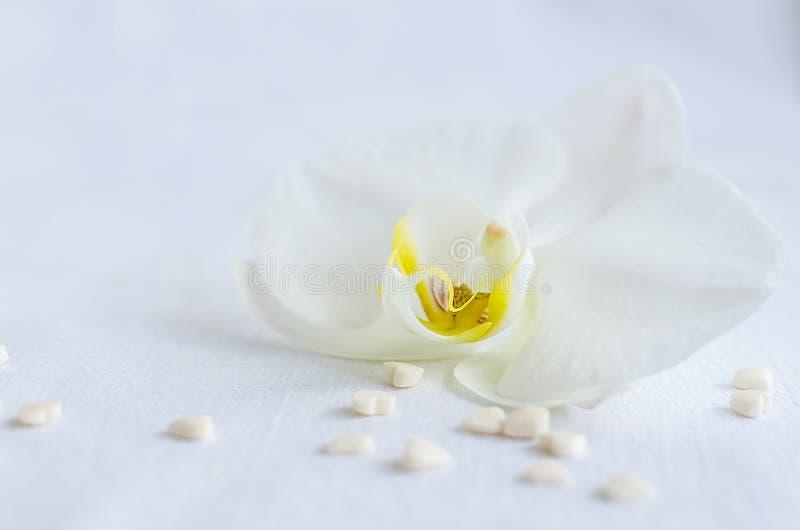 Witte orchidee met kleine harten stock afbeeldingen