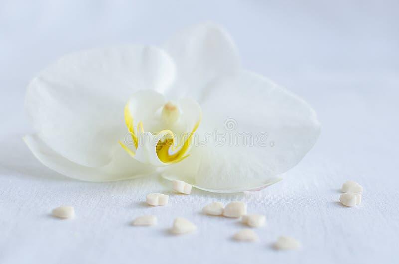 Witte orchidee met kleine harten stock fotografie