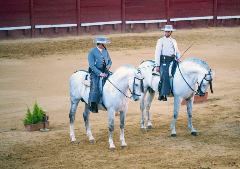 Witte paarden royalty-vrije stock fotografie