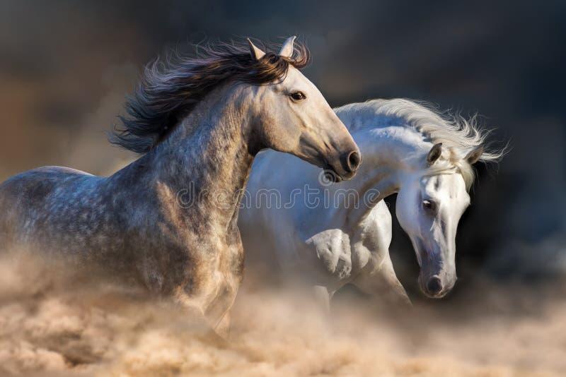 Witte paarden in motie royalty-vrije stock afbeeldingen