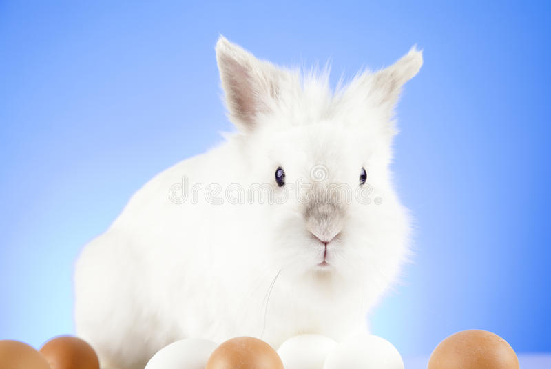 Witte Paashaaszitting met gekleurde rond eieren stock afbeeldingen
