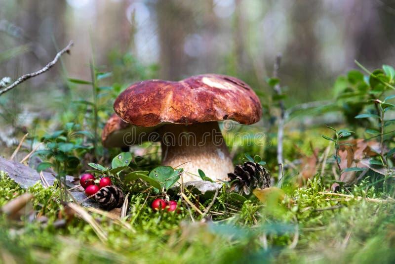 Witte paddestoel in het bos stock fotografie