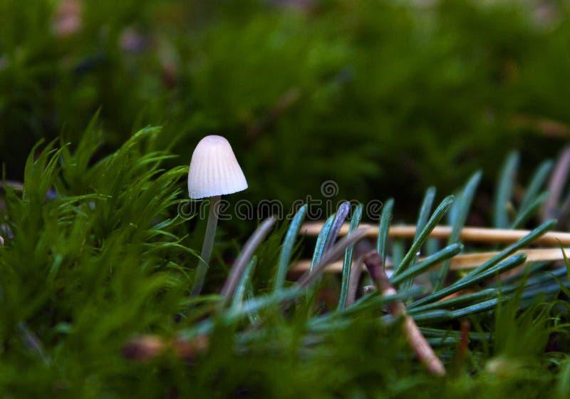Witte paddestoel in het groene bos royalty-vrije stock foto