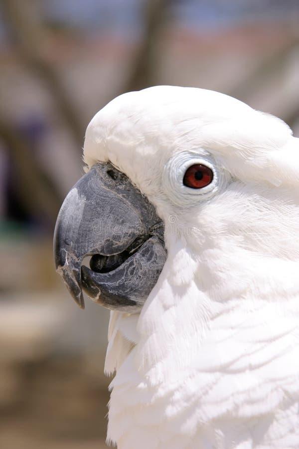 Witte Papegaai royalty-vrije stock afbeelding