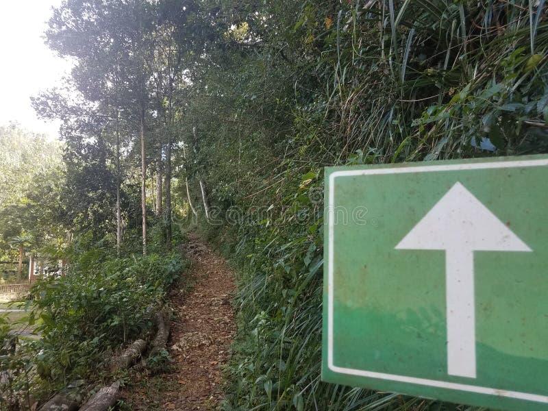 Witte pijl op groen teken en weg in het Guajataca-bos in Puerto Rico stock fotografie