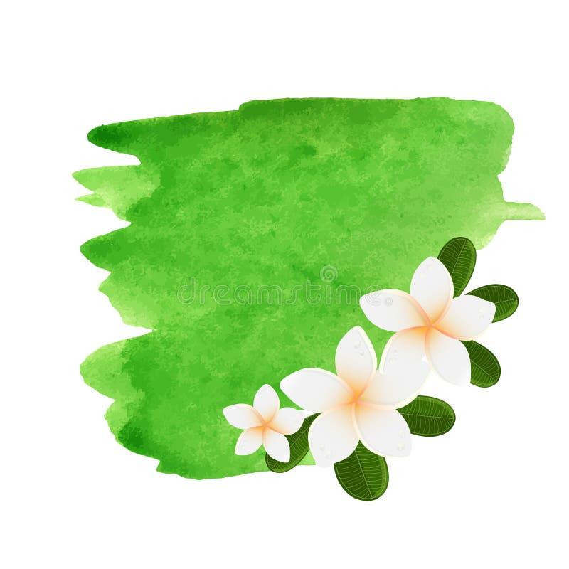 Witte plumeriabloem logotype Vectorillustratie van witte Twee Frangipani-bloemen met groene bladeren Kuuroord of het embleem van  vector illustratie
