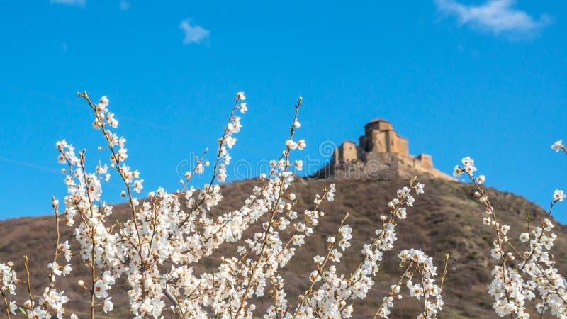 Witte pruimbloemen op blauwe hemel en de oude achtergrond van kerkjvari royalty-vrije stock fotografie