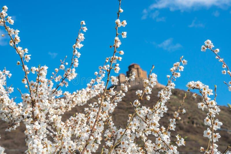 Witte pruimbloemen op blauwe hemel en de oude achtergrond van kerkjvari royalty-vrije stock afbeeldingen