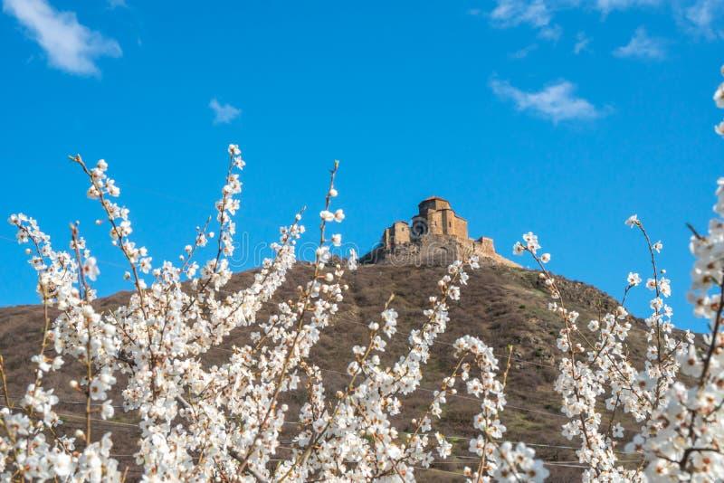 Witte pruimbloemen op blauwe hemel en de oude achtergrond van kerkjvari stock foto