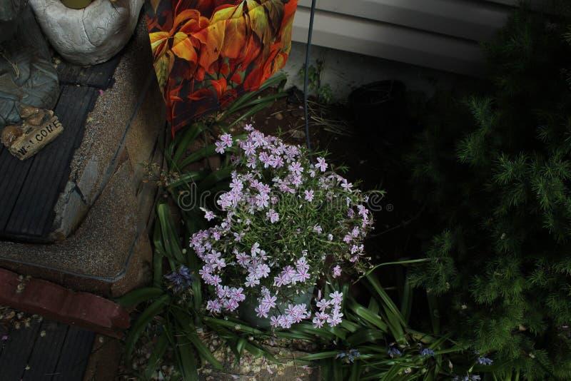 Witte purperachtige bloem stock foto