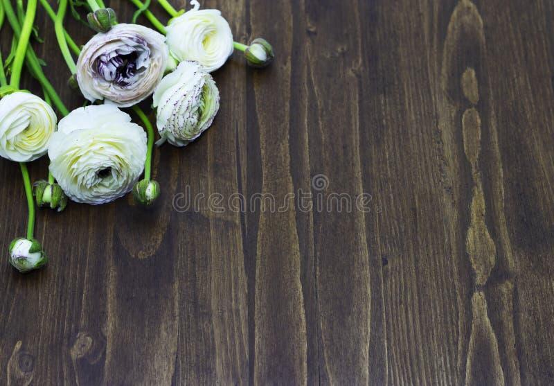 Witte ranunculus op houten ruimte als achtergrond voor tekst stock fotografie
