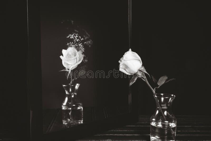 Witte Rose Dispersion stock afbeeldingen