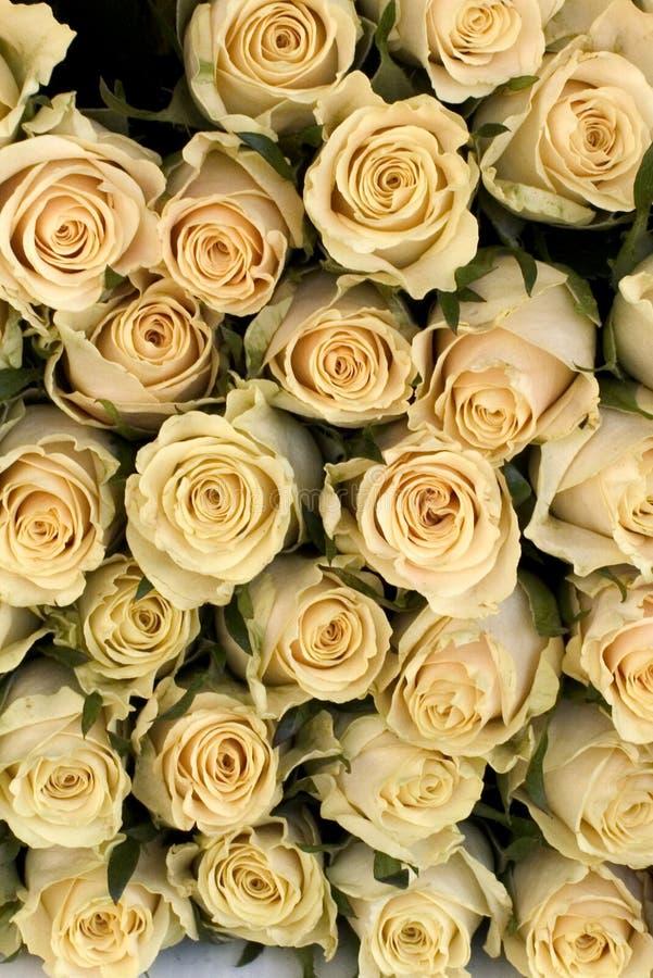 Download Witte rozen stock afbeelding. Afbeelding bestaande uit regeling - 26153