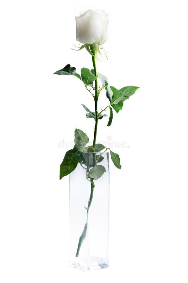Witte rozen op een wit royalty-vrije stock afbeelding