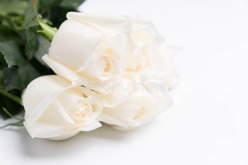 Witte rozen op een wit royalty-vrije stock foto