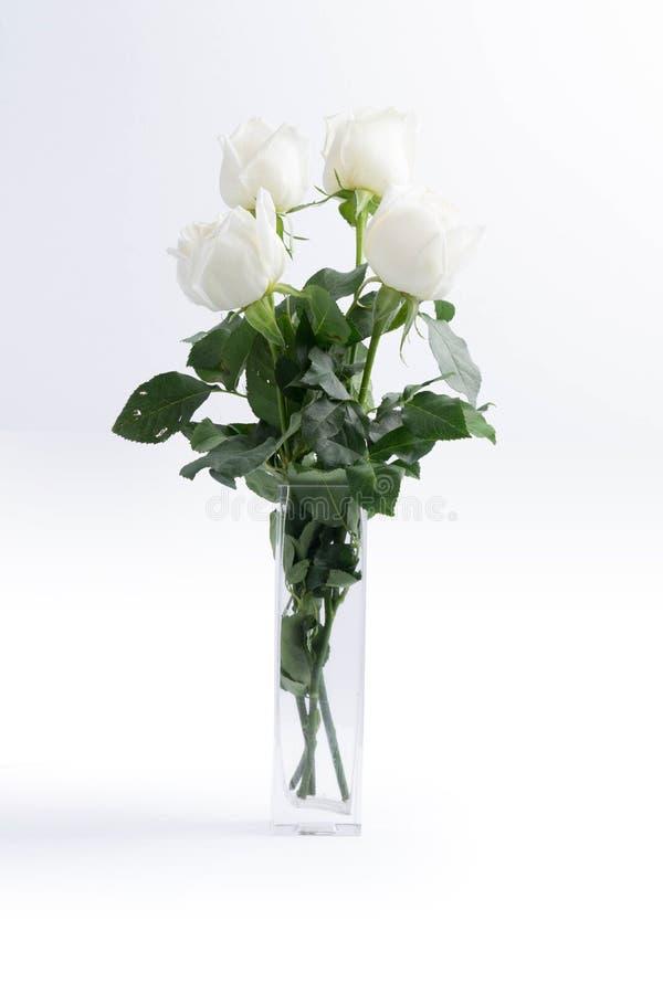 Witte rozen op een wit royalty-vrije stock fotografie