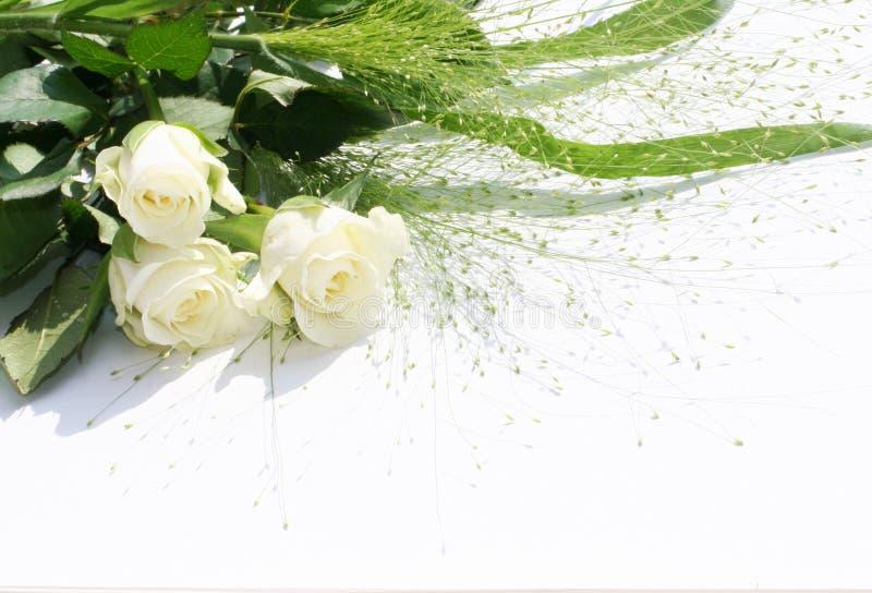 Witte rozen over wit stock fotografie