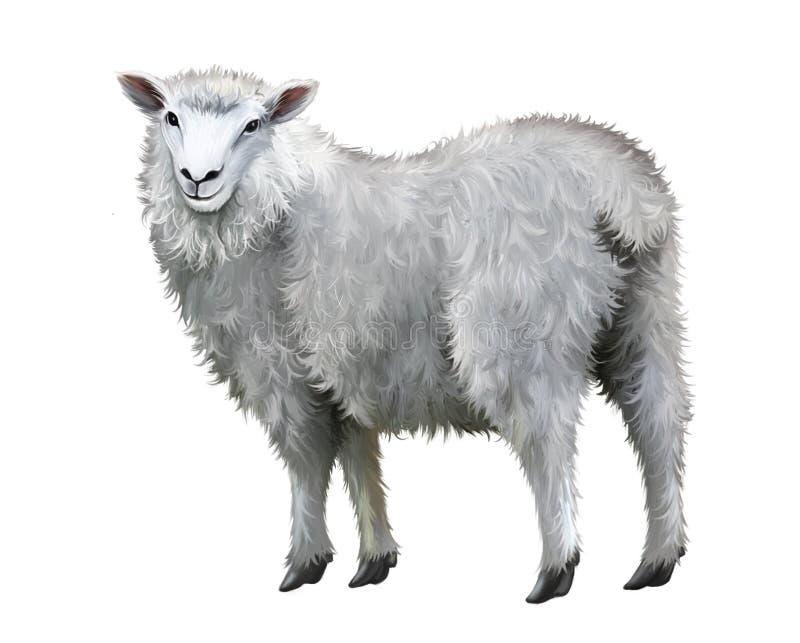 Witte schapen. royalty-vrije illustratie