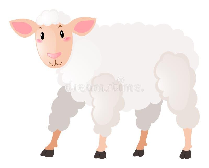 Witte schapen op witte achtergrond royalty-vrije illustratie