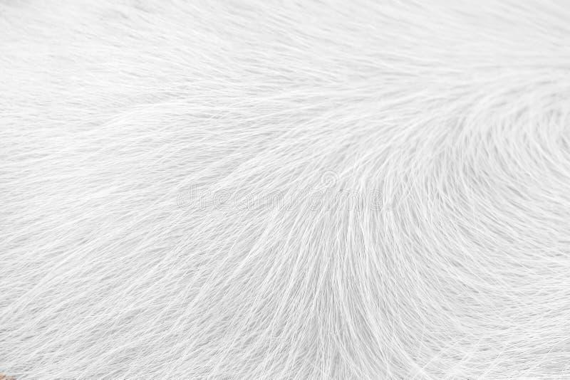 Witte schone de textuuraard van het paardbont voor achtergrond stock foto