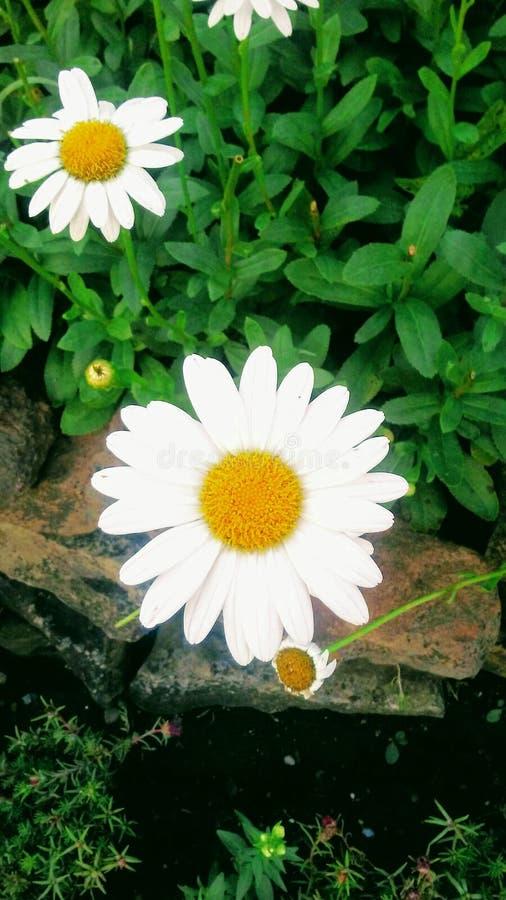 Witte Schoonheid! royalty-vrije stock foto's