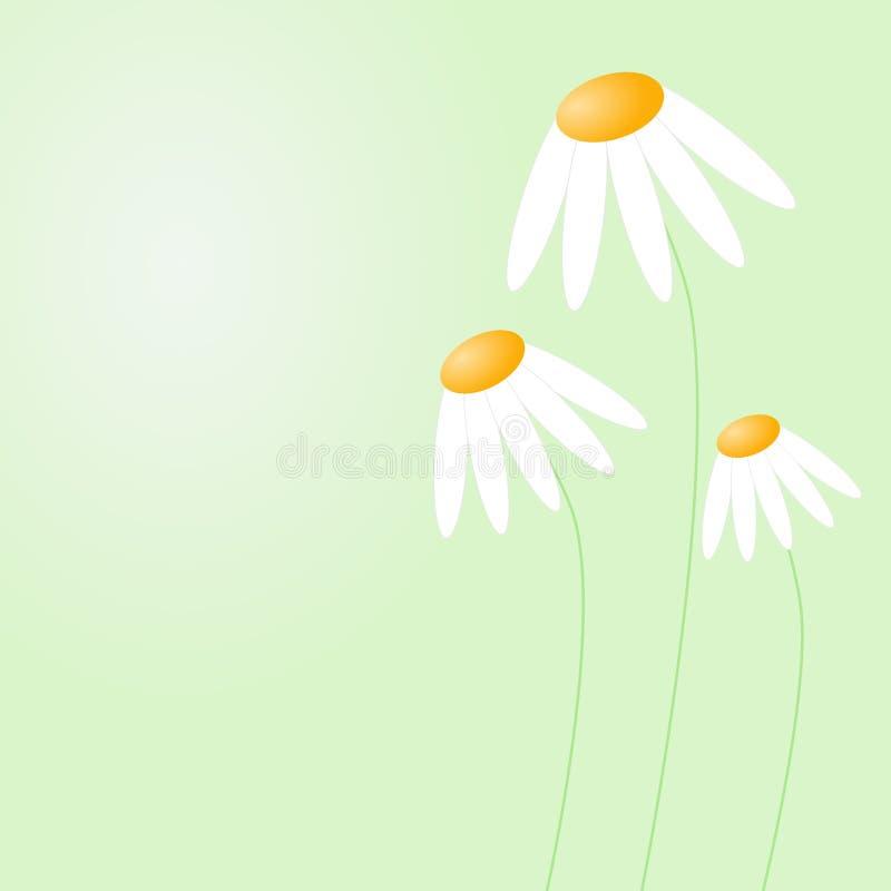 Witte schuwe madeliefjes stock illustratie