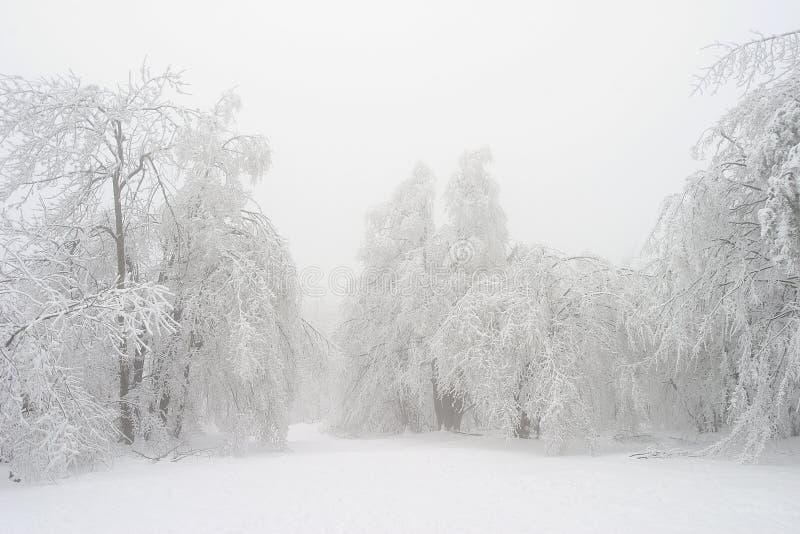Witte sneeuw stock foto