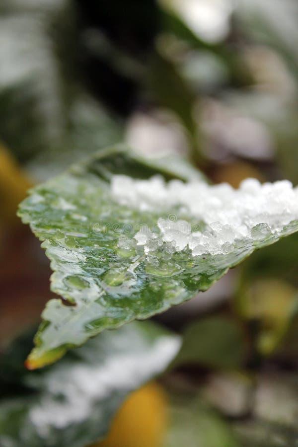 Witte sneeuw stock afbeeldingen