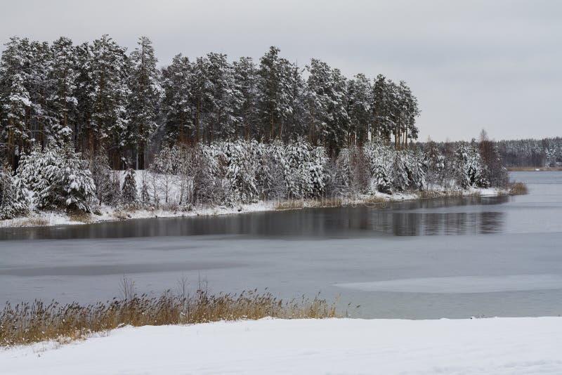 Witte sneeuw behandelde bomen in het de winterbos op de oever van het meer stock afbeeldingen