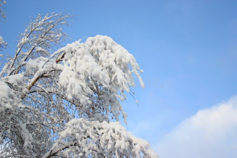 Witte sneeuw en blauwe hemel stock afbeeldingen