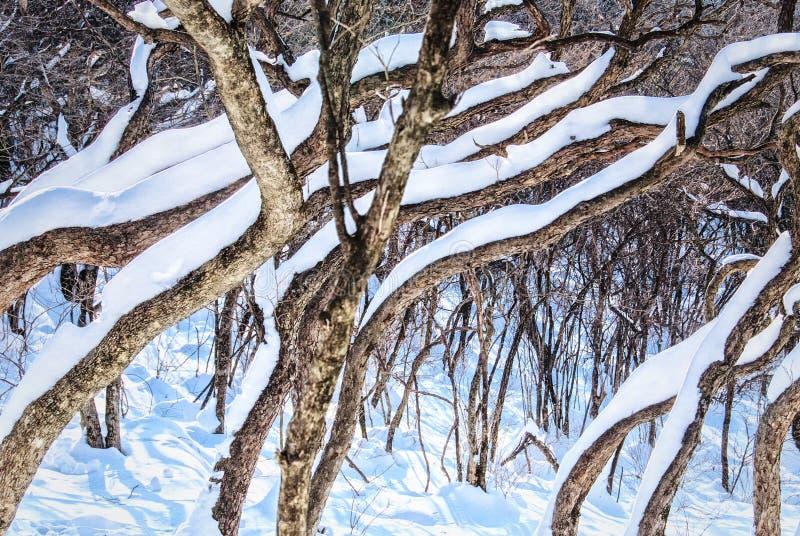 Witte sneeuw op schors van boom royalty-vrije stock fotografie