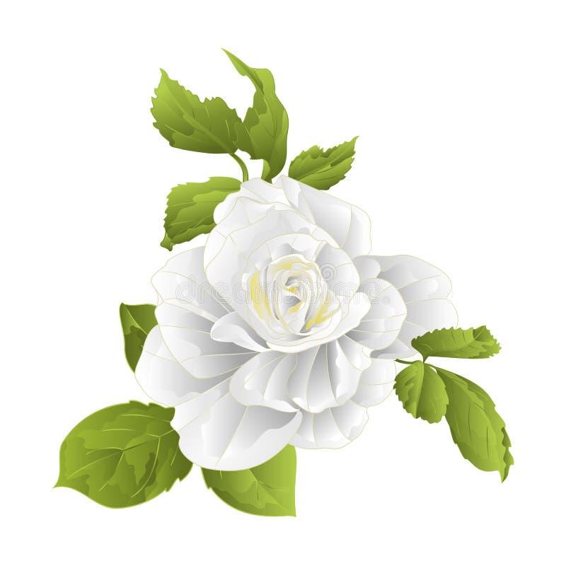 Witte stam de bloem nam toe en verlaat wijnoogst op een witte vector editable illustratie als achtergrond stock illustratie