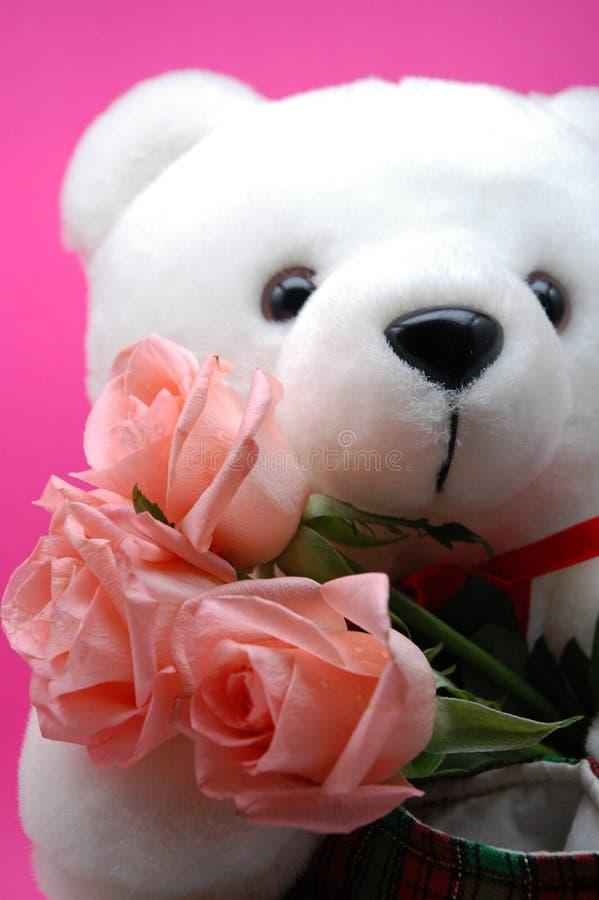 Witte Teddybeer en roze rozen stock afbeeldingen